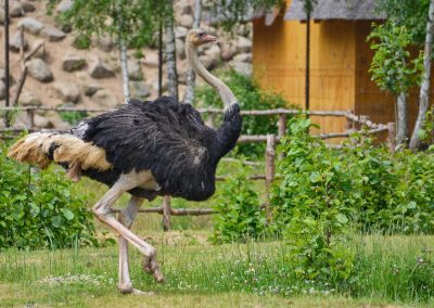 zoo-charlotta